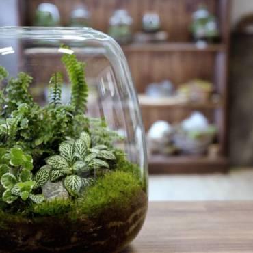 Rostlinná terária & mechária