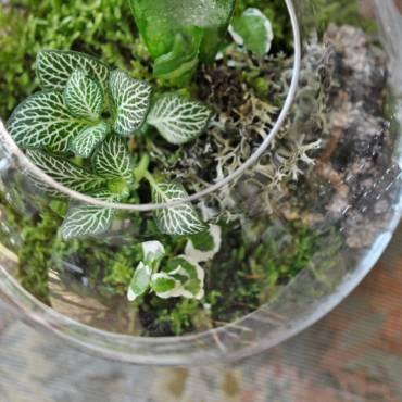 Minizahrádky a skleníčky