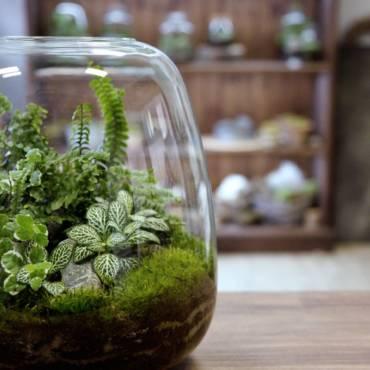Rostlinné terárium