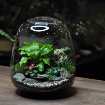 Rostlinné terárium U jednoho stolu